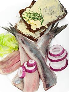 Bilder Meeresfrüchte Fische - Lebensmittel Zwiebel Brot Weißer hintergrund Öle