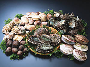 Picture Seafoods Shells Oysters, Scallops Food