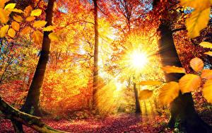 Bilder Jahreszeiten Herbst Bäume Blattwerk Lichtstrahl Baumstamm Sonne