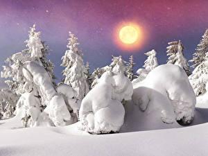 Fotos Jahreszeiten Winter Schnee Fichten Sonne