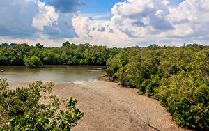 Hintergrundbilder Singapur Park See Wälder Sand Sungei Buloh