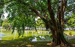 Hintergrundbilder Singapur Park Teich Bäume East Coast Park