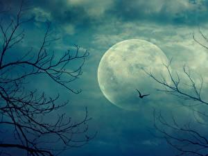 Bilder Himmel Mond Ast