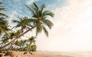 Fotos Himmel Palmen Strand Bäume