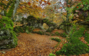 Hintergrundbilder Spanien Herbst Parks Steine Laubmoose Blattwerk Bäume Opakua Agurain Natur