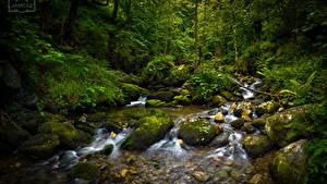 Bilder Spanien Wälder Steine Bäume Laubmoose Bäche Asturias