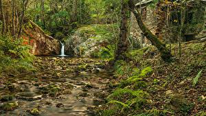 Bilder Spanien Wälder Stein Bäume Bäche Blatt Asturias