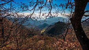 Fotos Spanien Gebirge Bäume Ast Santa Maria de Besora Natur