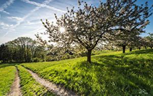 Hintergrundbilder Frühling Blühende Bäume Wege Gras Lichtstrahl