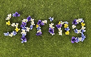 Bilder Frühling Rasen Englisch Wort Spring Blumen