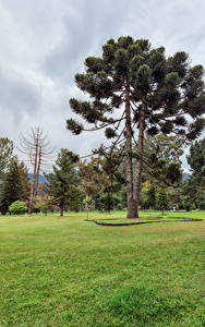 Hintergrundbilder Sri Lanka Park Rasen Bäume Queen Victoria Park