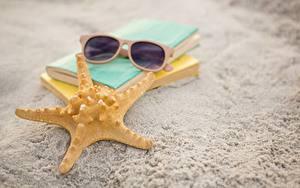 Bilder Seesterne Hautnah Sand Brille