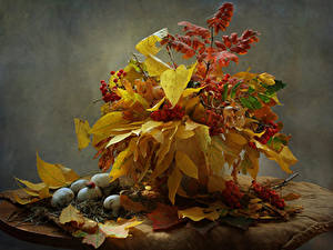 Bilder Stillleben Herbst Pilze Natur Mehlbeeren Blattwerk Natur