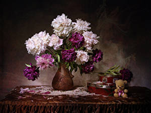 Bilder Stillleben Sträuße Pfingstrosen Teddybär Vase Tisch Schachtel Blüte