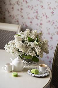 Fotos Stillleben Syringa Kaffee Weiß Tasse Macaron Blüte Lebensmittel