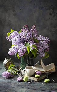 Bilder Stillleben Flieder Tasse Macarons Buch Blüte