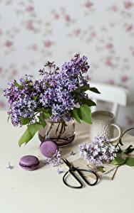 Fotos Stillleben Syringa Vase Macaron Ast Tasse Blüte Lebensmittel