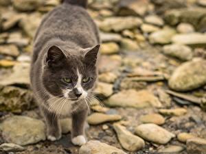 Hintergrundbilder Stein Katze Bokeh Starren ein Tier