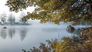 Fotos Steine See Morgen Ast Gras Nebel