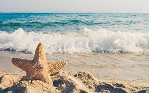 Hintergrundbilder Sommer Meer Wasserwelle Seesterne Sand Unscharfer Hintergrund