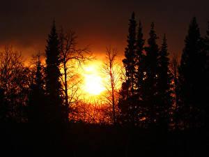 Fotos Sonne Silhouetten Bäume