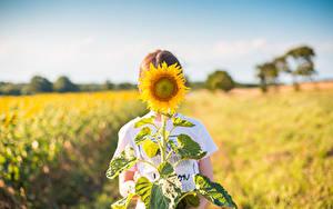Bilder Sonnenblumen Felder Bokeh Blüte