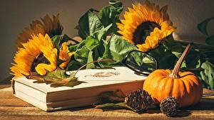Fotos Sonnenblumen Kürbisse Stillleben Buch Brille Zapfen Blattwerk Blüte Lebensmittel