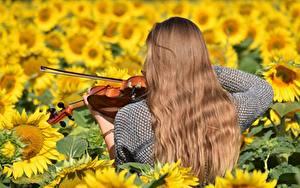 Bilder Sonnenblumen Violine Acker Haar Hinten Braune Haare junge frau