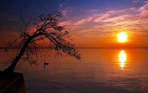 Fotos Sonnenaufgänge und Sonnenuntergänge See Bäume Silhouette Sonne Horizont