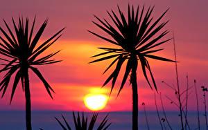 Bilder Sonnenaufgänge und Sonnenuntergänge Palmen Silhouetten Sonne