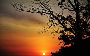 Bilder Sonnenaufgänge und Sonnenuntergänge Ast Sonne Silhouette Bäume
