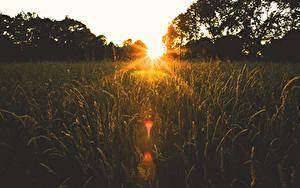 Hintergrundbilder Sonnenaufgänge und Sonnenuntergänge Felder Sonne Spitzen Natur