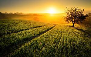 Bilder Sonnenaufgänge und Sonnenuntergänge Felder Sonne