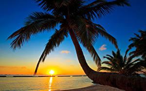 Fotos Sonnenaufgänge und Sonnenuntergänge Malediven Palmengewächse Baumstamm Sonne