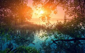 Fotos Sonnenaufgänge und Sonnenuntergänge See Bäume Ast Sonne