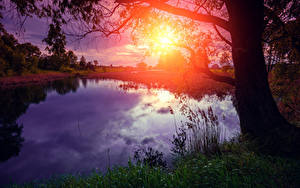 Fotos Sonnenaufgänge und Sonnenuntergänge See Baumstamm Sonne Natur