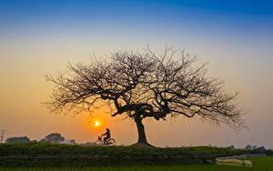 Fotos Sonnenaufgänge und Sonnenuntergänge Asiatische Bäume Fahrräder Sonne Natur