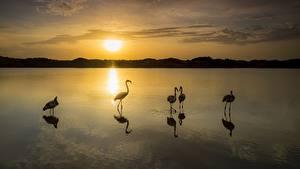 Hintergrundbilder Morgendämmerung und Sonnenuntergang Vögel Flamingos See Spiegelung Spiegelbild Tiere