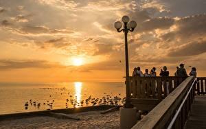 Hintergrundbilder Morgendämmerung und Sonnenuntergang Vogel Möwe Vereinigte Staaten Waterfront Straßenlaterne Florida Städte