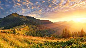 Bilder Sonnenaufgänge und Sonnenuntergänge Wälder Landschaftsfotografie Gras Lichtstrahl Hügel