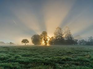 Bilder Sonnenaufgänge und Sonnenuntergänge Grünland Morgen Nebel Lichtstrahl Gras Bäume