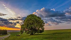 Fotos Sonnenaufgänge und Sonnenuntergänge Grünland Himmel Bäume