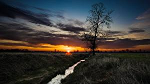 Bilder Morgendämmerung und Sonnenuntergang Grünland Bäche Bäume Gras Sonne