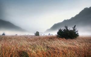 Desktop hintergrundbilder Sonnenaufgänge und Sonnenuntergänge Gebirge Grünland Nebel Gras Natur