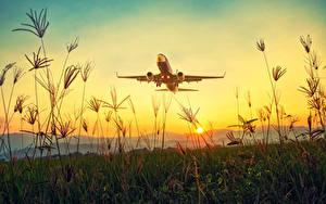 Bilder Morgendämmerung und Sonnenuntergang Flugzeuge Verkehrsflugzeug Gras Abheben Sonne Natur