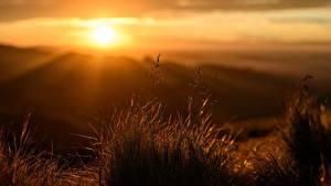 Fotos Sonnenaufgänge und Sonnenuntergänge Lichtstrahl Gras Bokeh Natur