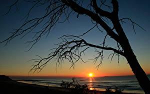 Bilder Sonnenaufgänge und Sonnenuntergänge Meer Bäume Ast Sonne Silhouetten