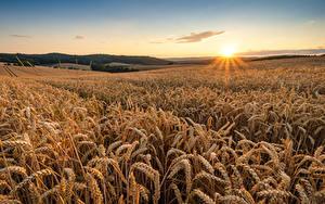 Hintergrundbilder Sonnenaufgänge und Sonnenuntergänge Himmel Acker Weizen Sonne Ähre