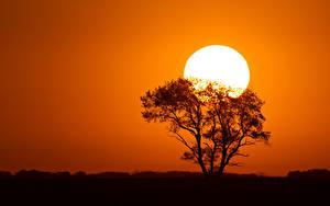 Hintergrundbilder Sonnenaufgänge und Sonnenuntergänge Sonne Silhouette Bäume