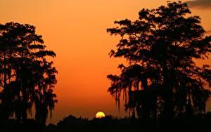 Fotos Sonnenaufgänge und Sonnenuntergänge Sonne Silhouetten Bäume